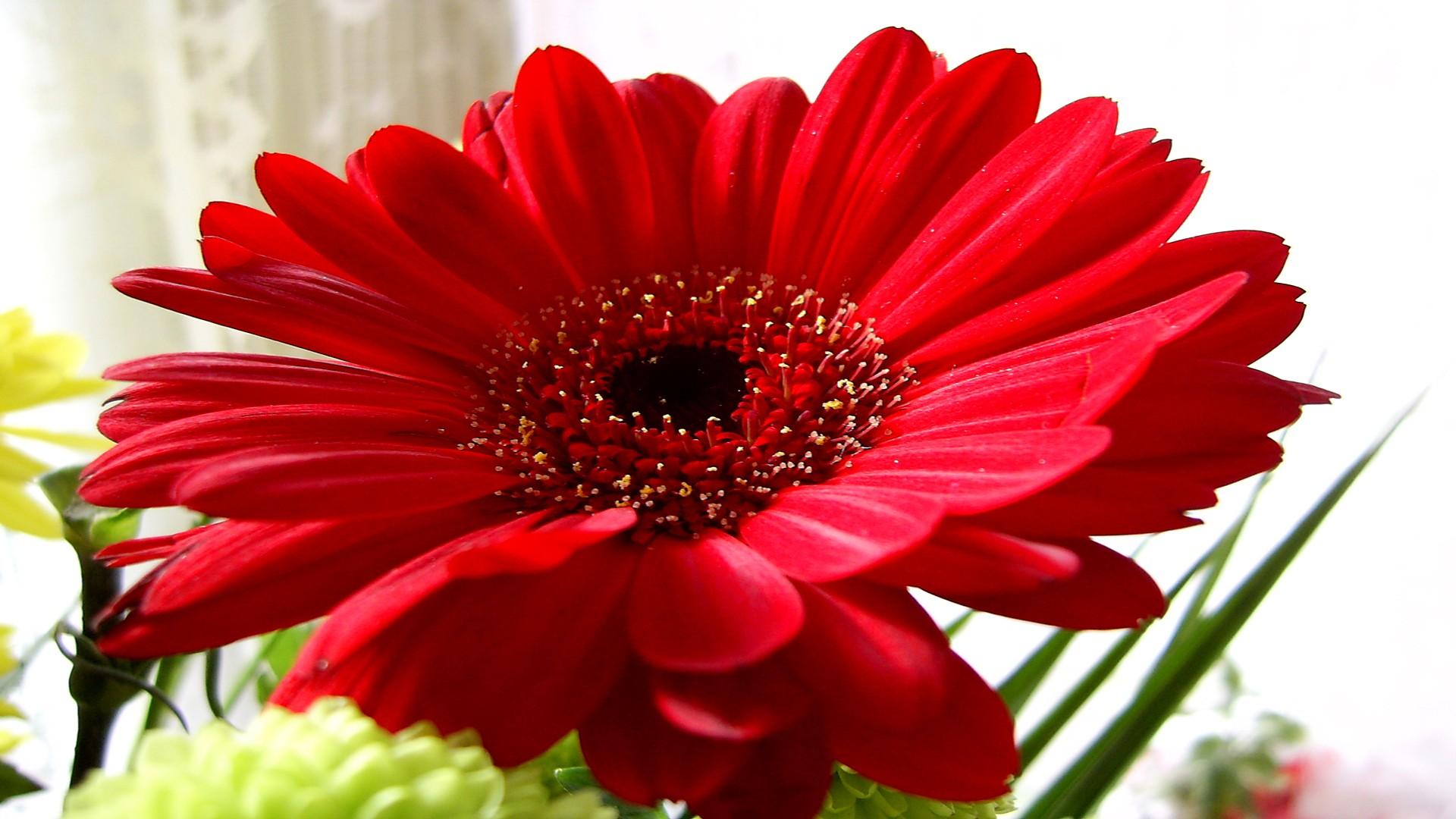 natural flower picture for wallpaper wallpapersafari