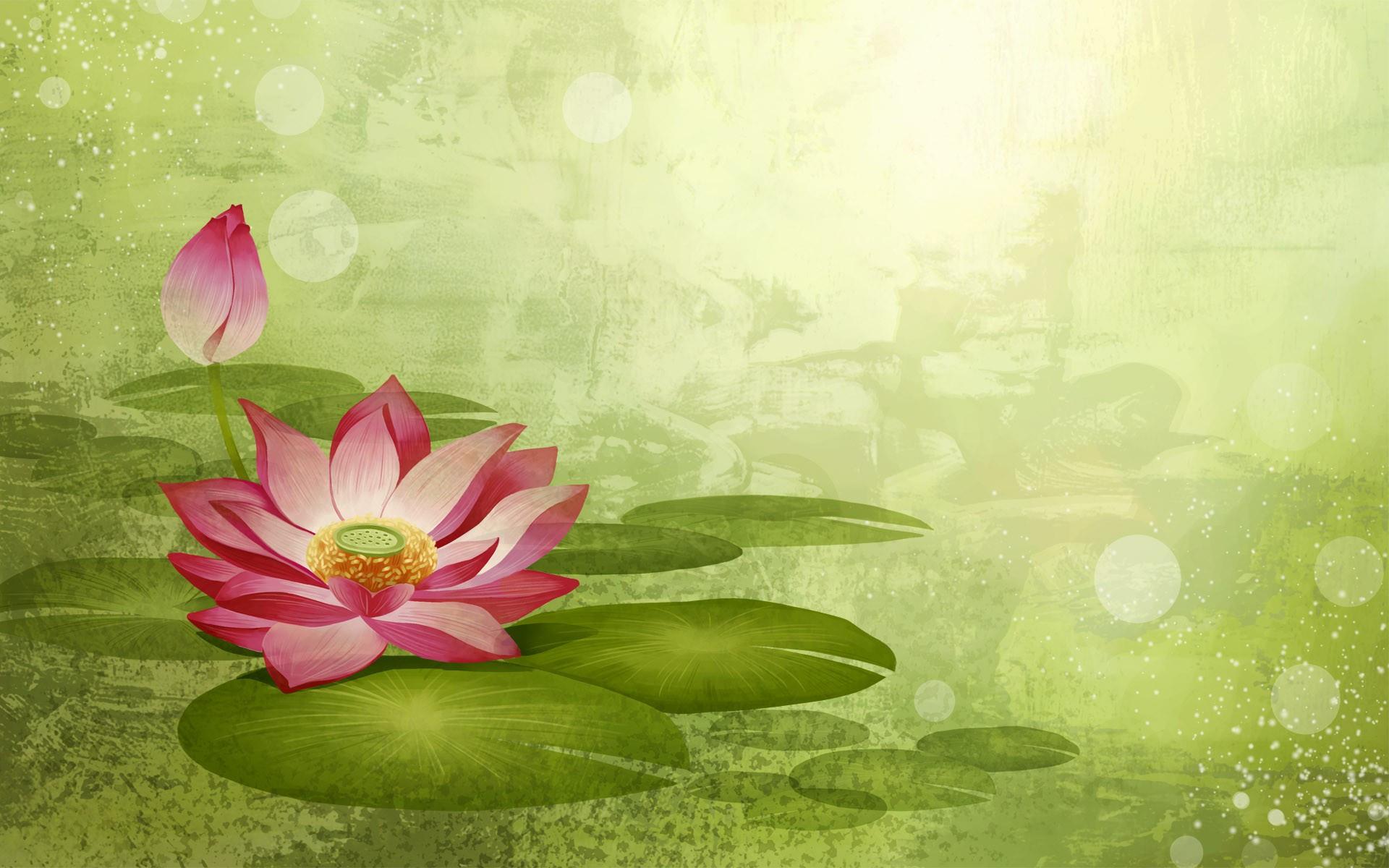 Water Lily Desktop Wallpaper Wallpapersafari