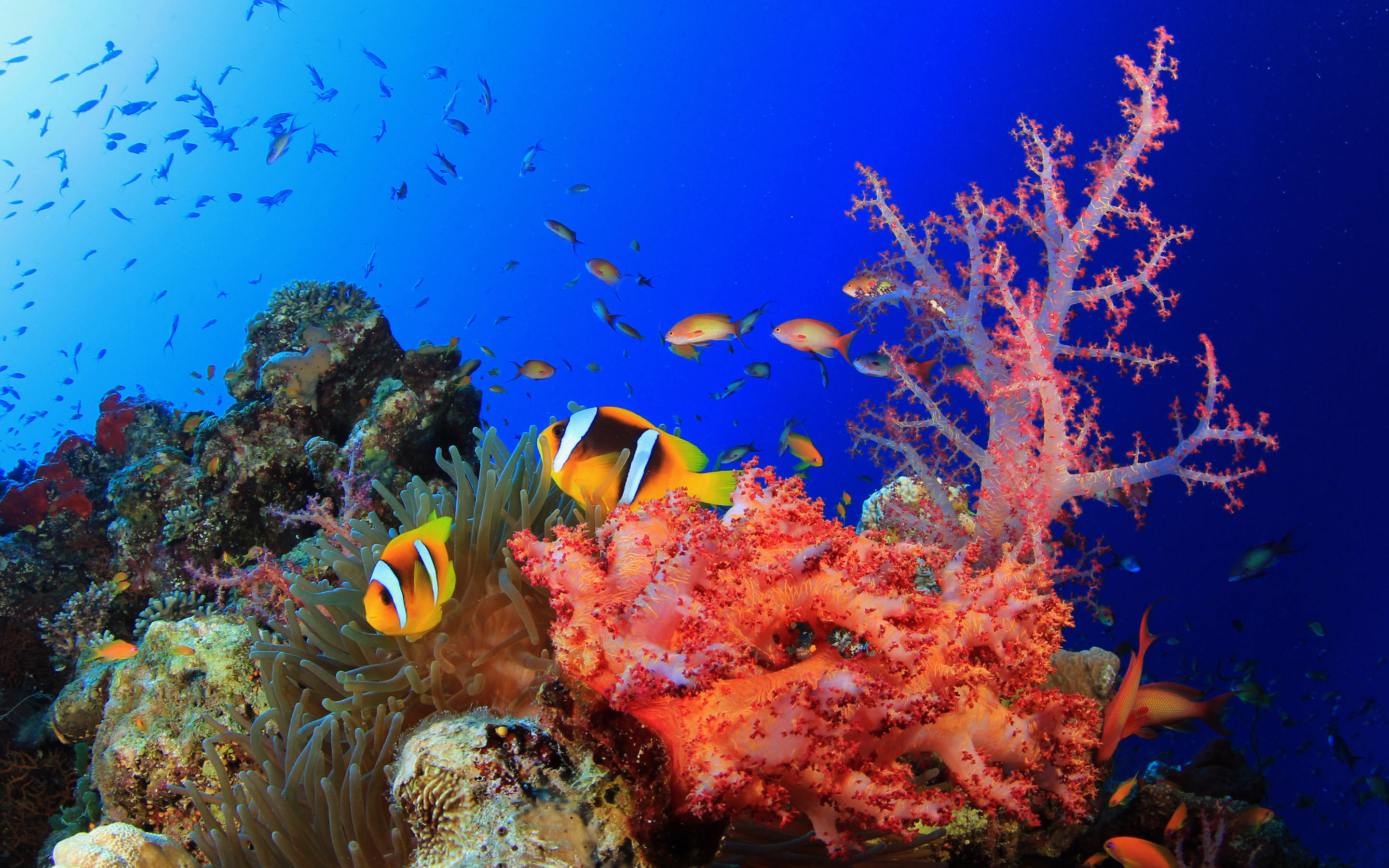 Coral Reefs Image   SA Wallpapers 2880x1800