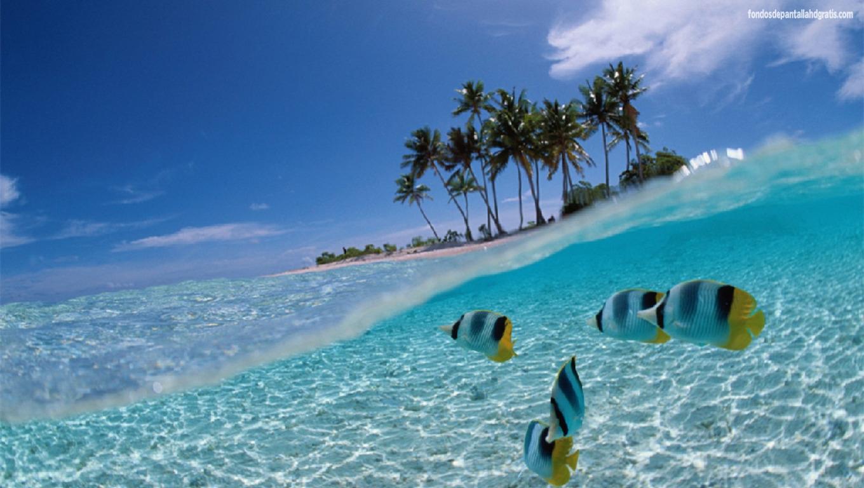 3D Tropical Fish Desktop Wallpapers - WallpaperSafari  3D Tropical Fis...