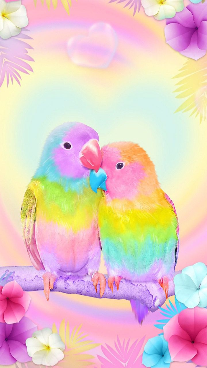3D Cute Colorful Lovebirds Parrot Gravity Theme Install on 720x1280