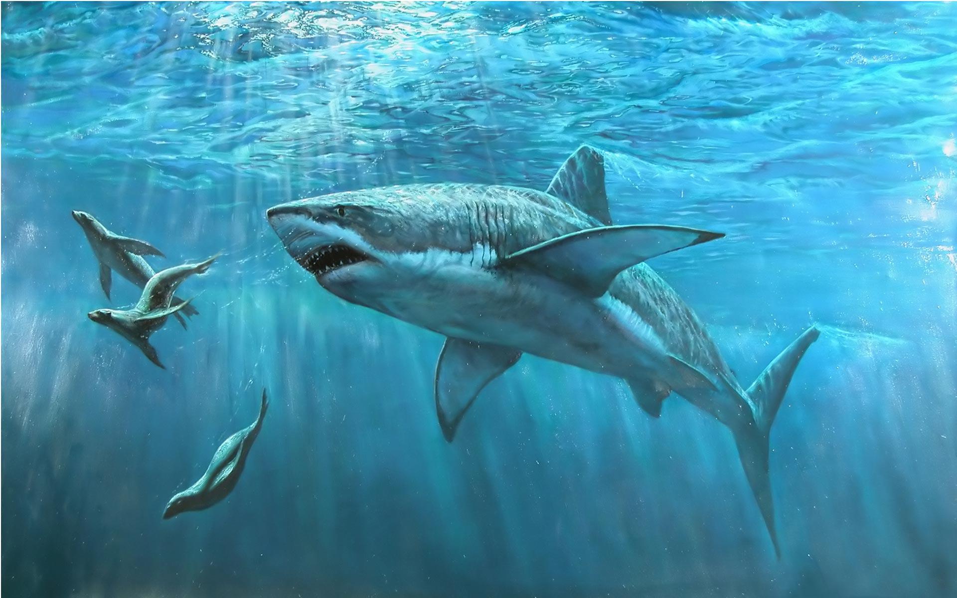 download Shark hunting pc hd Wallpaper High Quality 1920x1200