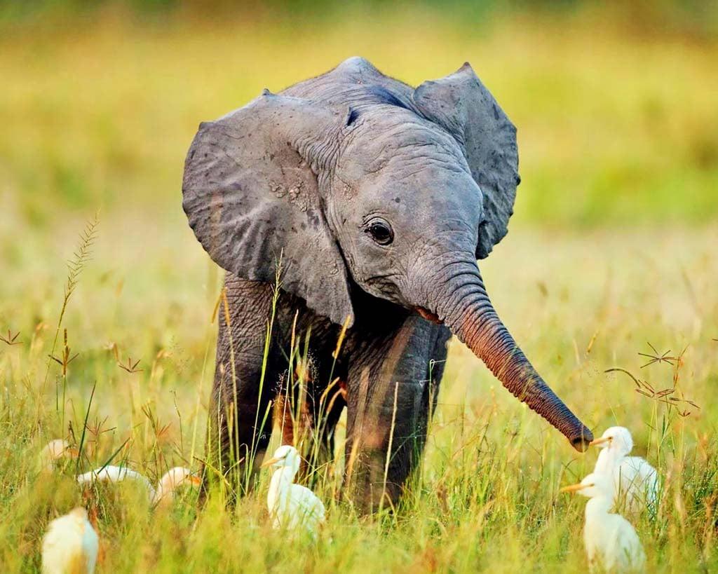 Baby elephant 1024x819