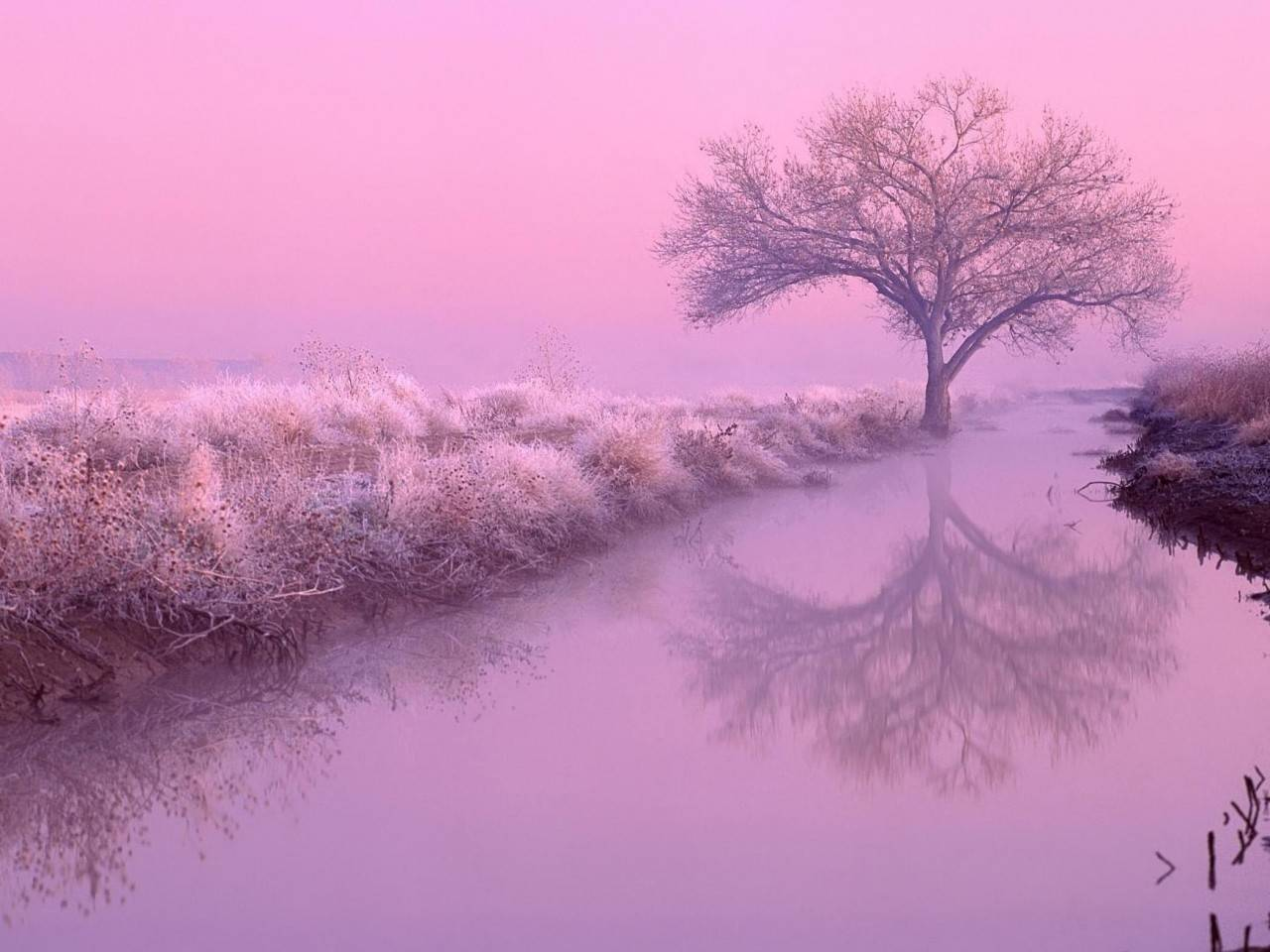 Pink nature   Nature Wallpaper 1280x960