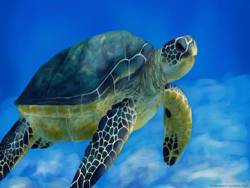 44 Sea Turtle Iphone Wallpaper On Wallpapersafari