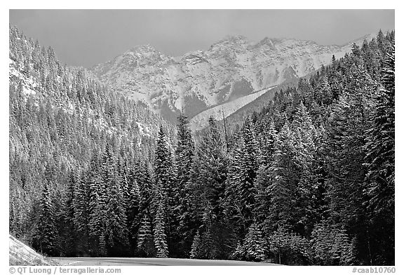 Go Back Pix For Snowy Forest Wallpaper Black And White 576x392