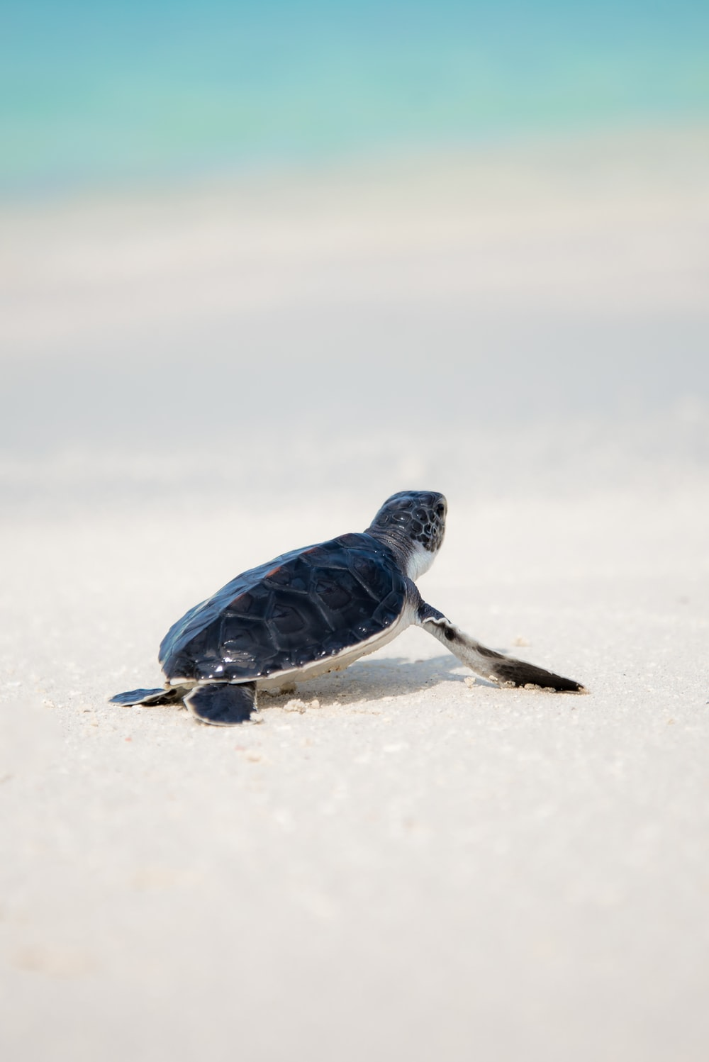 500 Turtle Pictures Download Images on Unsplash 1000x1498