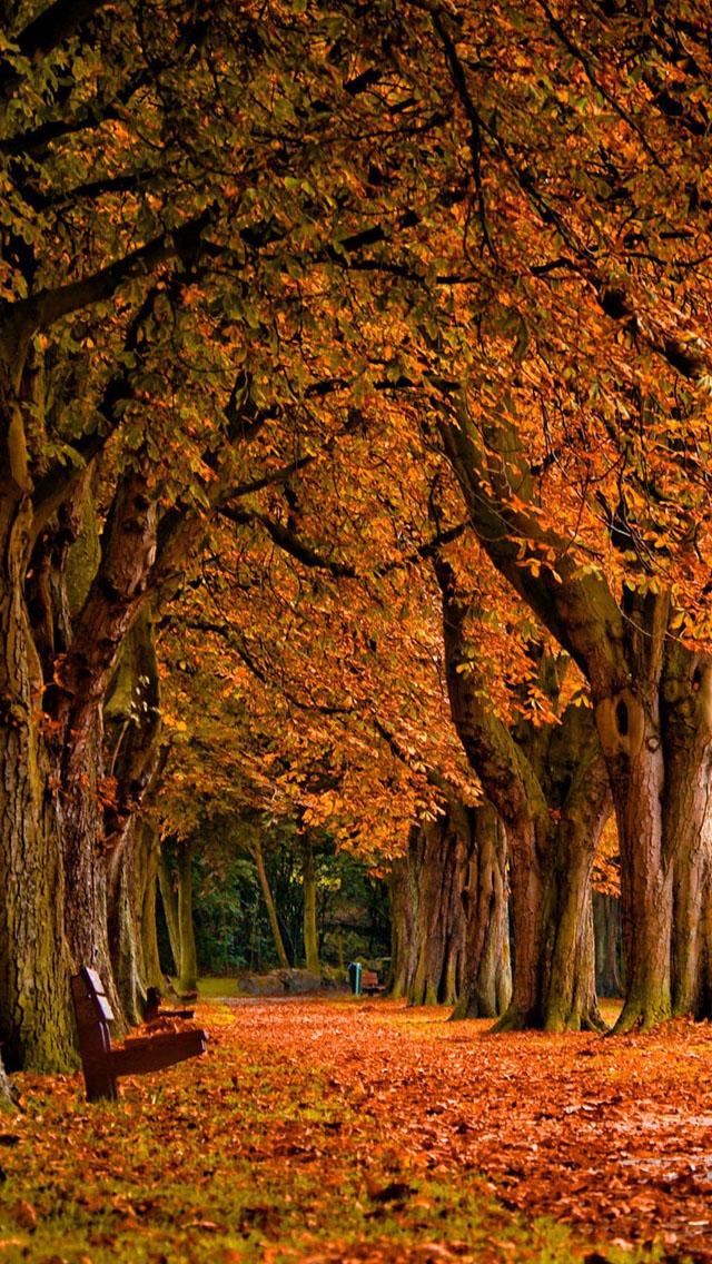 50+ iPhone 6 Autumn Wallpaper on WallpaperSafari