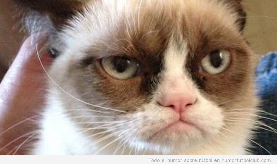 Grumpy Cat Del Meme Al Estrellato Images Crazy Gallery 960x570