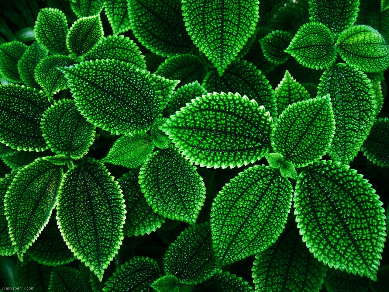 Green 1280x960 pixels Wallpapers tagged Flower Wallpapers Flowers 1280x960