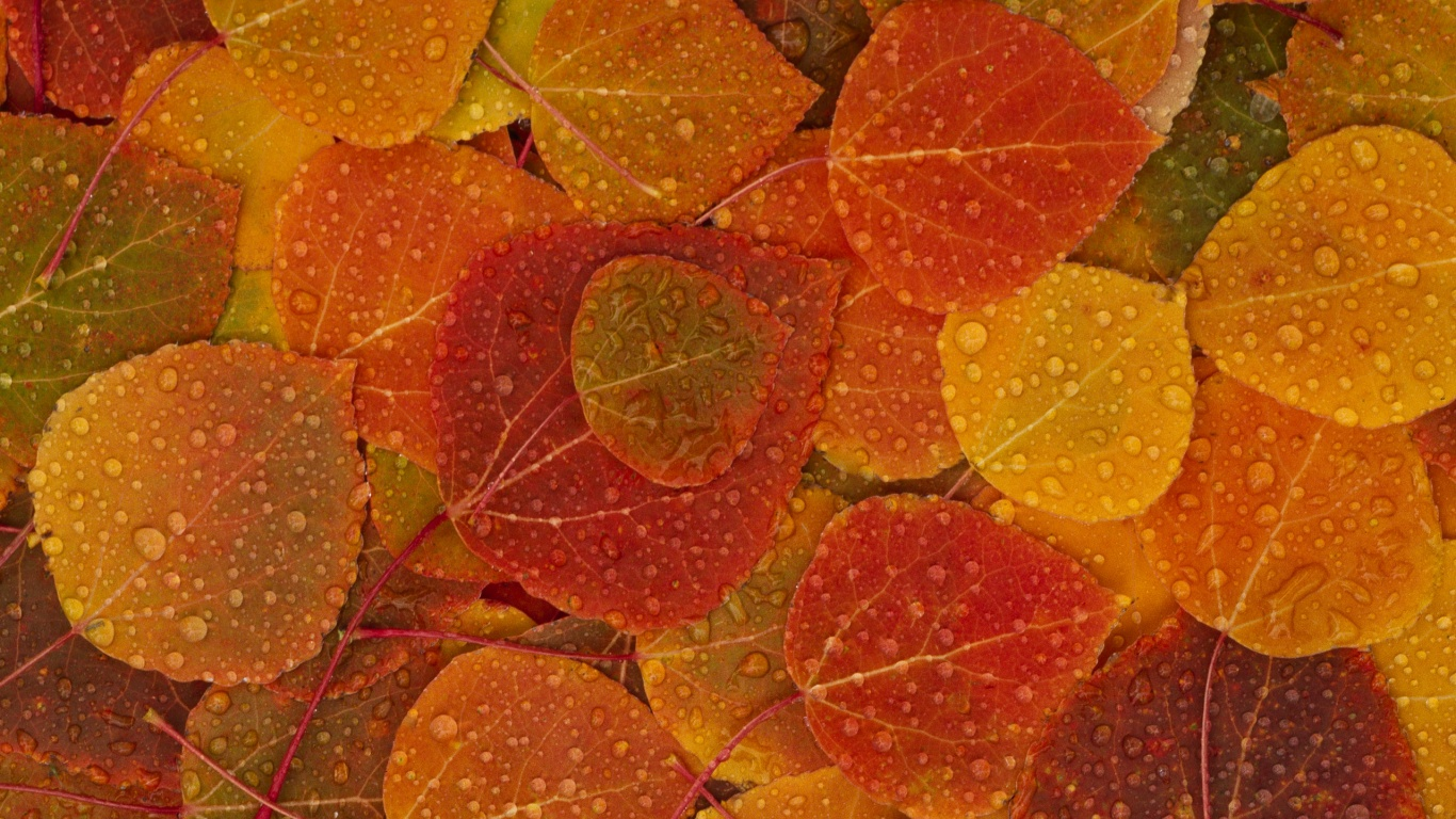 1366x768 Fall Leaves desktop PC and Mac wallpaper 1366x768