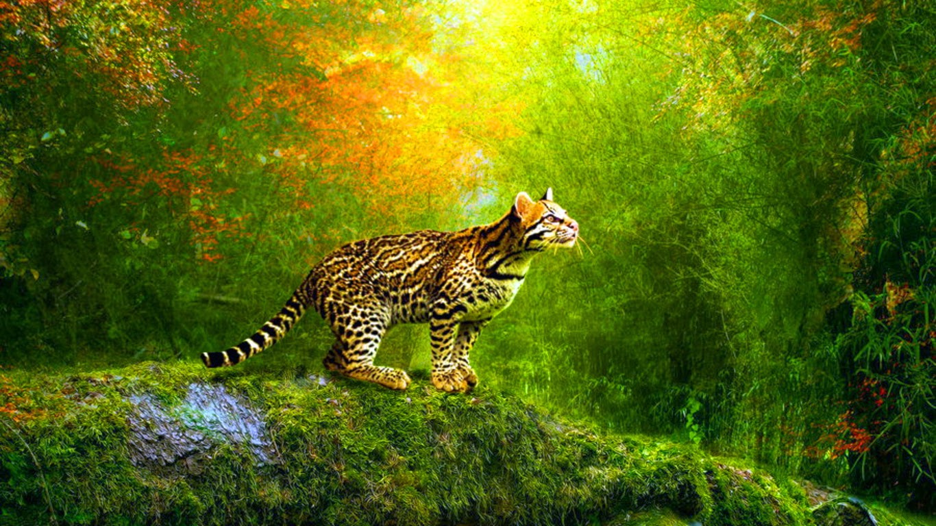 Wallpaper download moving - Free 3d Animated Wallpaper Free 3d Animated Wallpaper