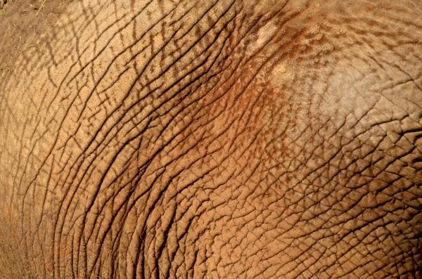 Elephant skin background   stock photo 600x397