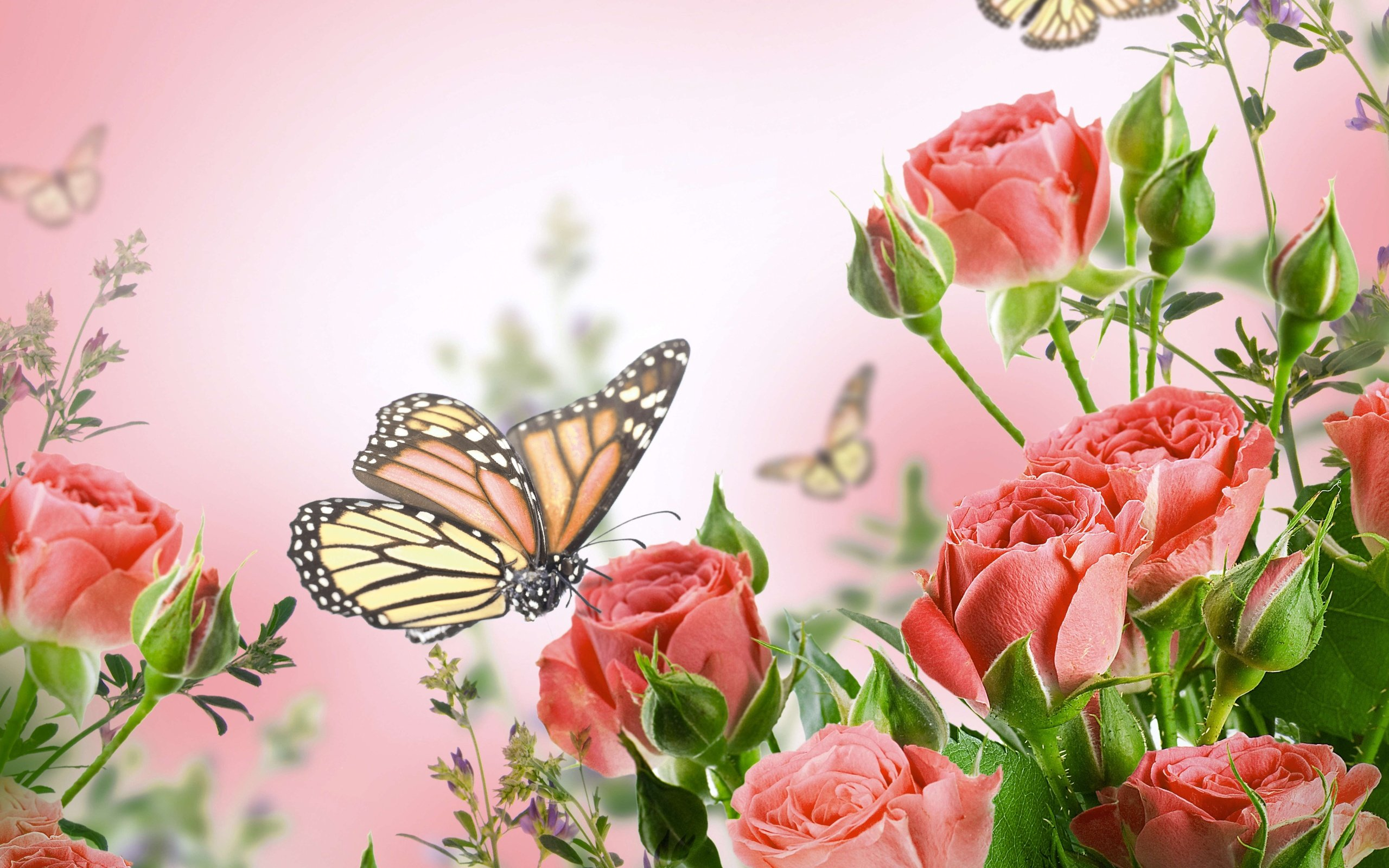 Beautiful Butterflies And Flowers Wallpapers   52DazheW Gallery 2560x1600