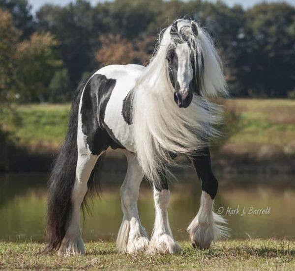 Horse Wallpaper 600x552