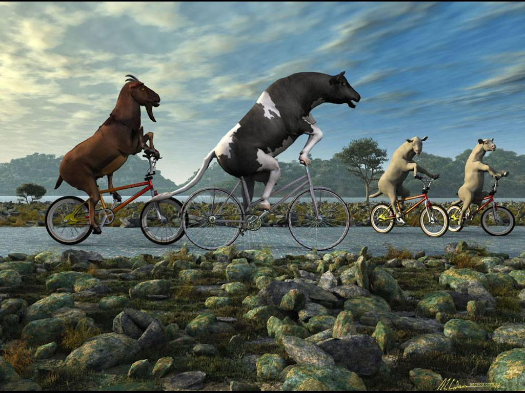 animal bmx wallpaper - photo #18