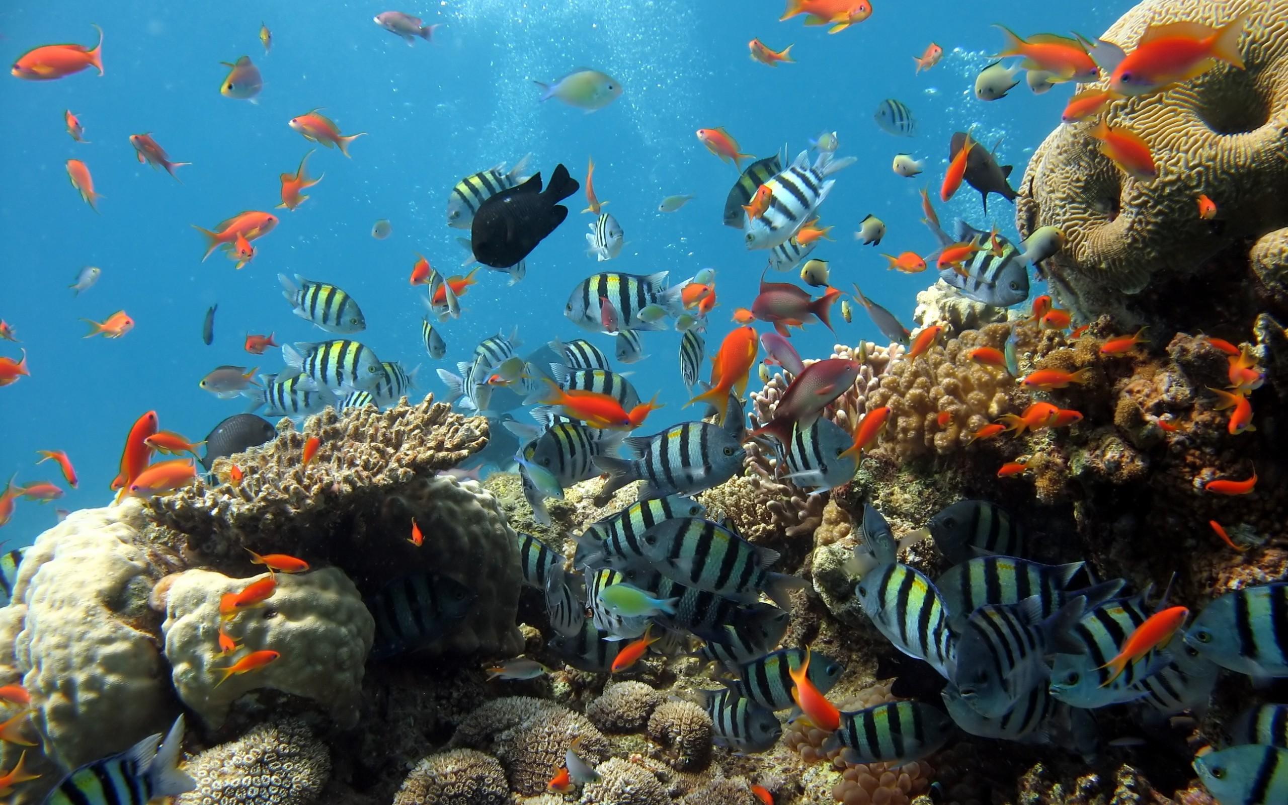 Aquarium Fishi 922   HD Desktop Wallpaper HD Wallpapers 2560x1600