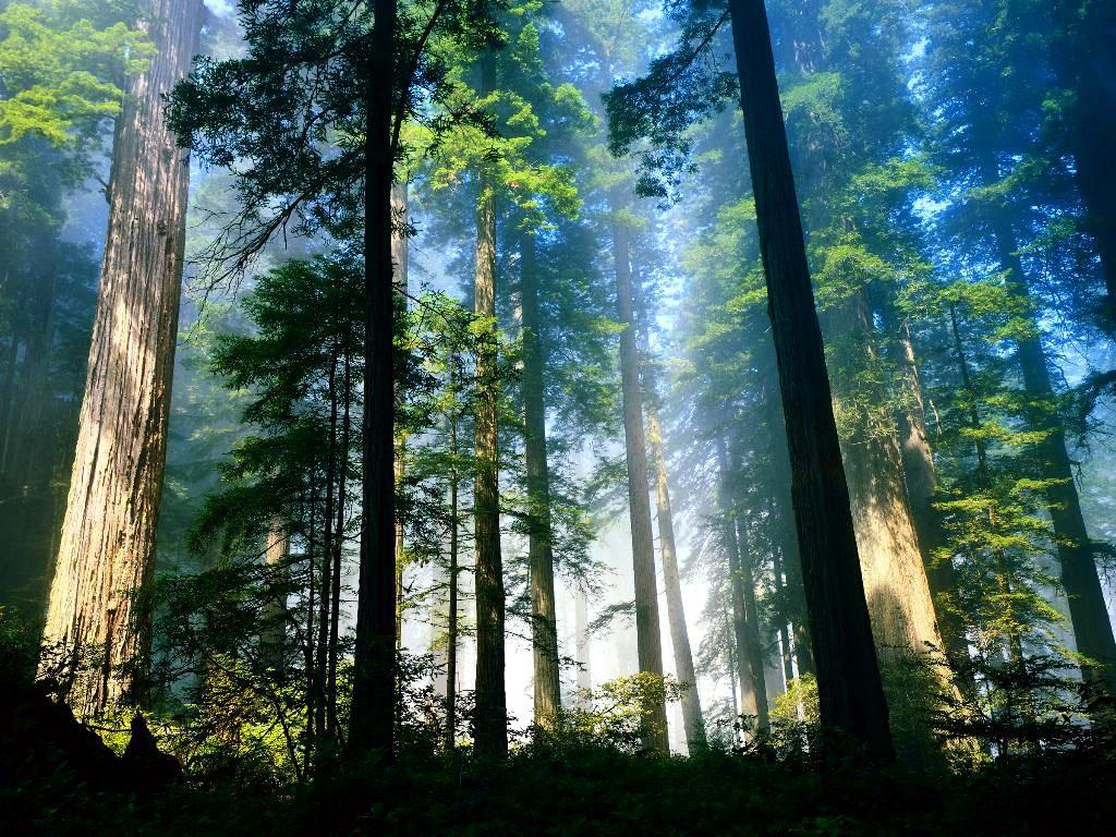 Woods Wallpaper 1024x768