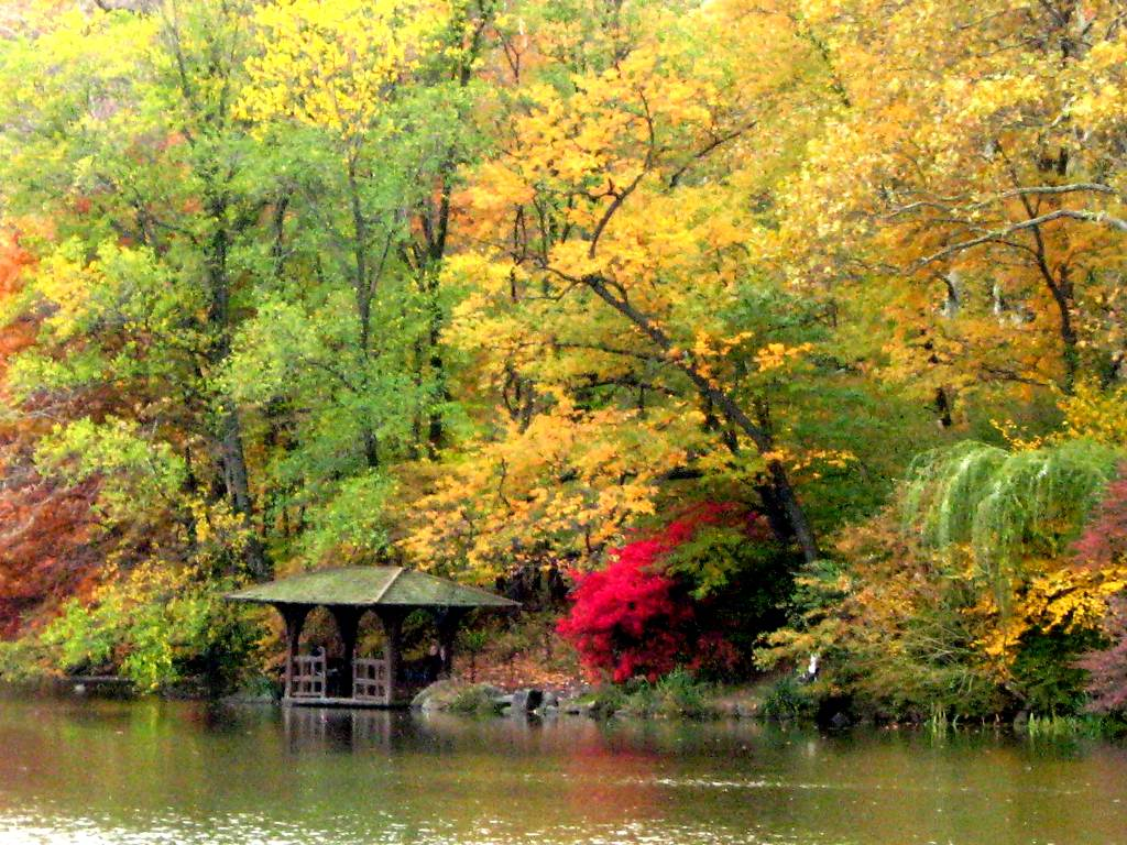 Fall Colors In Central Park Background Image Wallpaper or Texture 1024x768