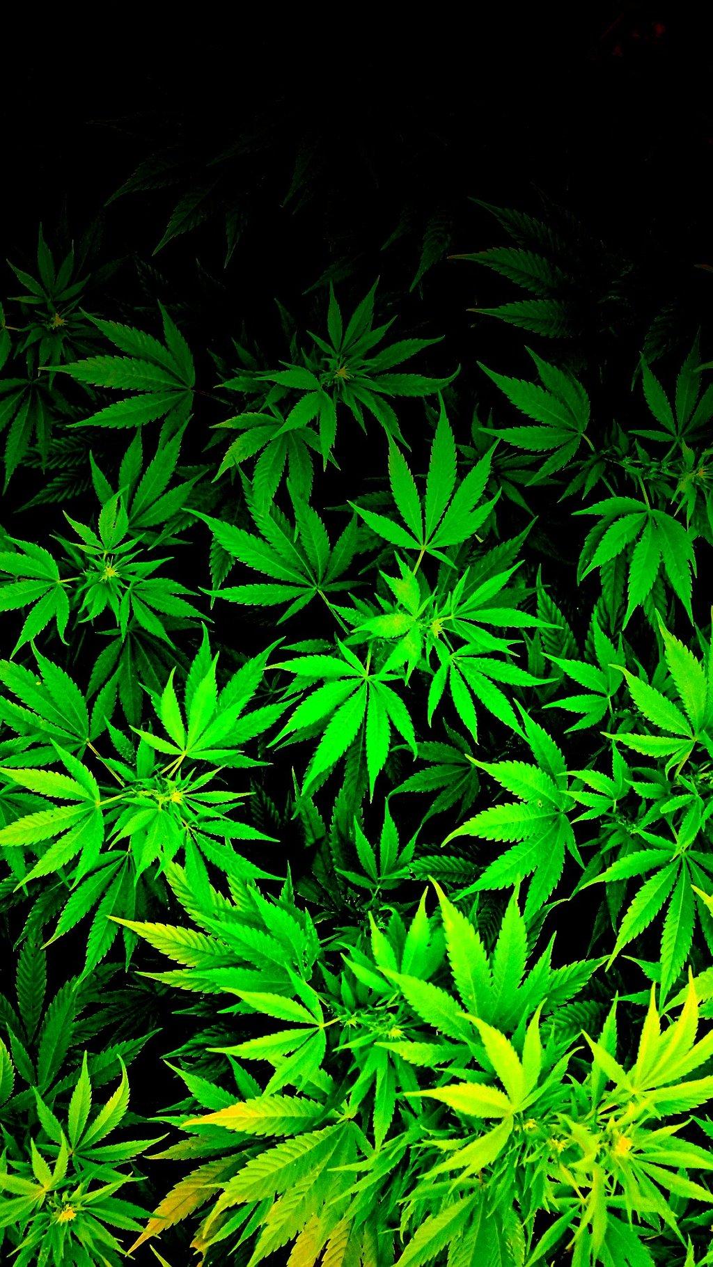 iPod iPhone weed marijuana cannabis Wallpaper by thetruemask on 1024x1820