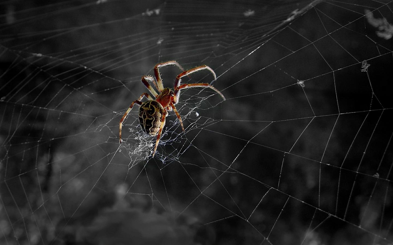 Spider Web Background Spider Web 1440x900