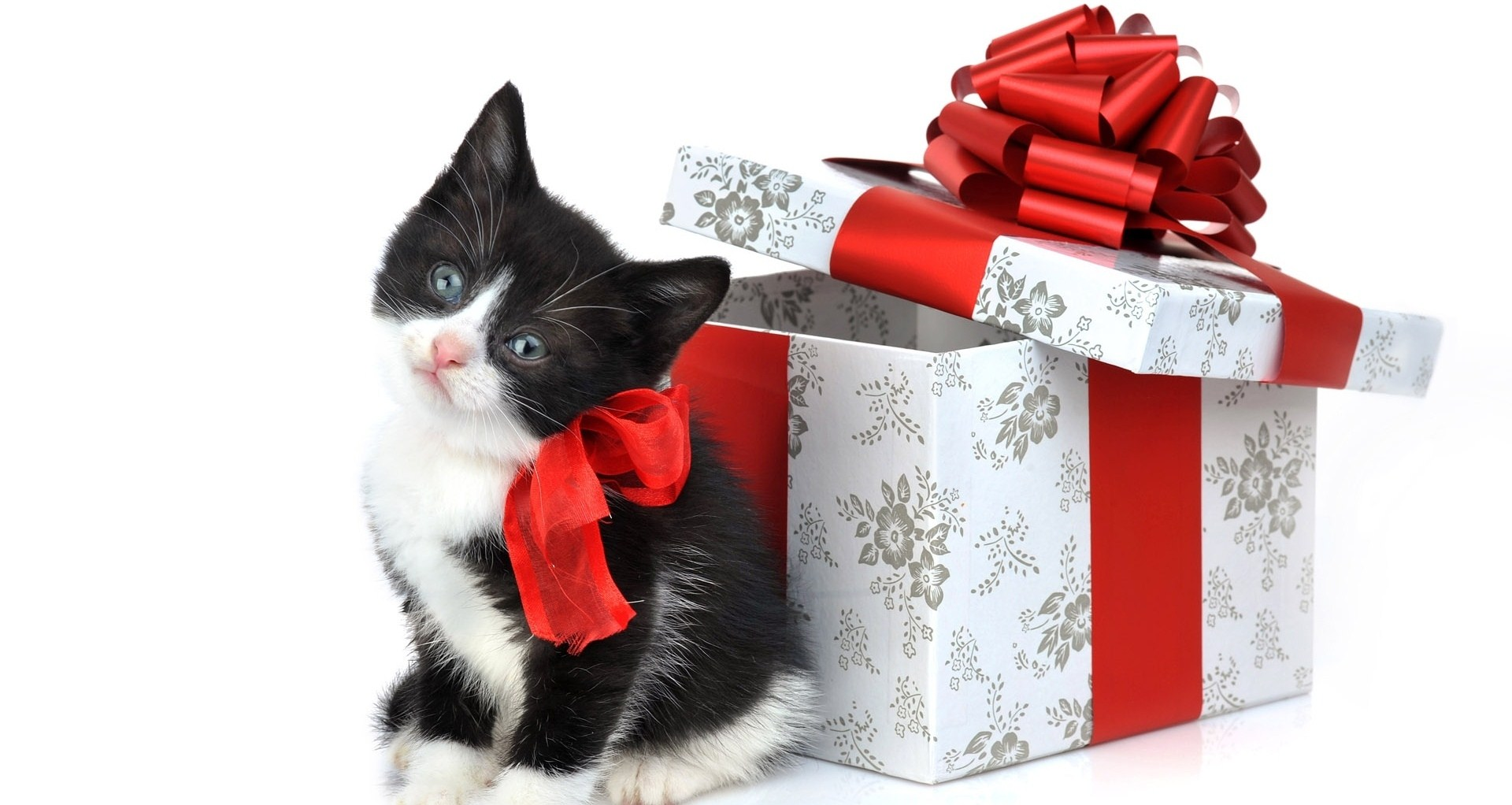 christmas cat gift pictures Christmas cat wallpaper 2015 Christmas 1920x1022