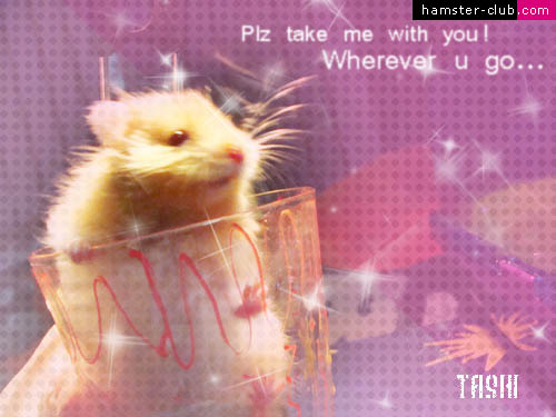 Hamster Club Visitors Creativity Hamster Wallpapers Hamster Art 500x375