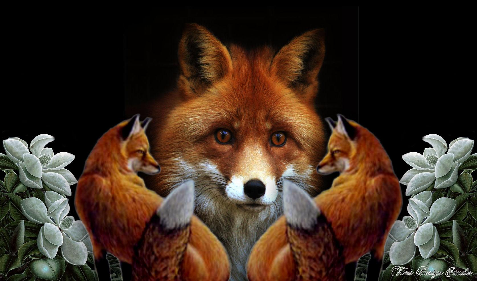 Fox Wallpaper Animal  WallpaperSafari