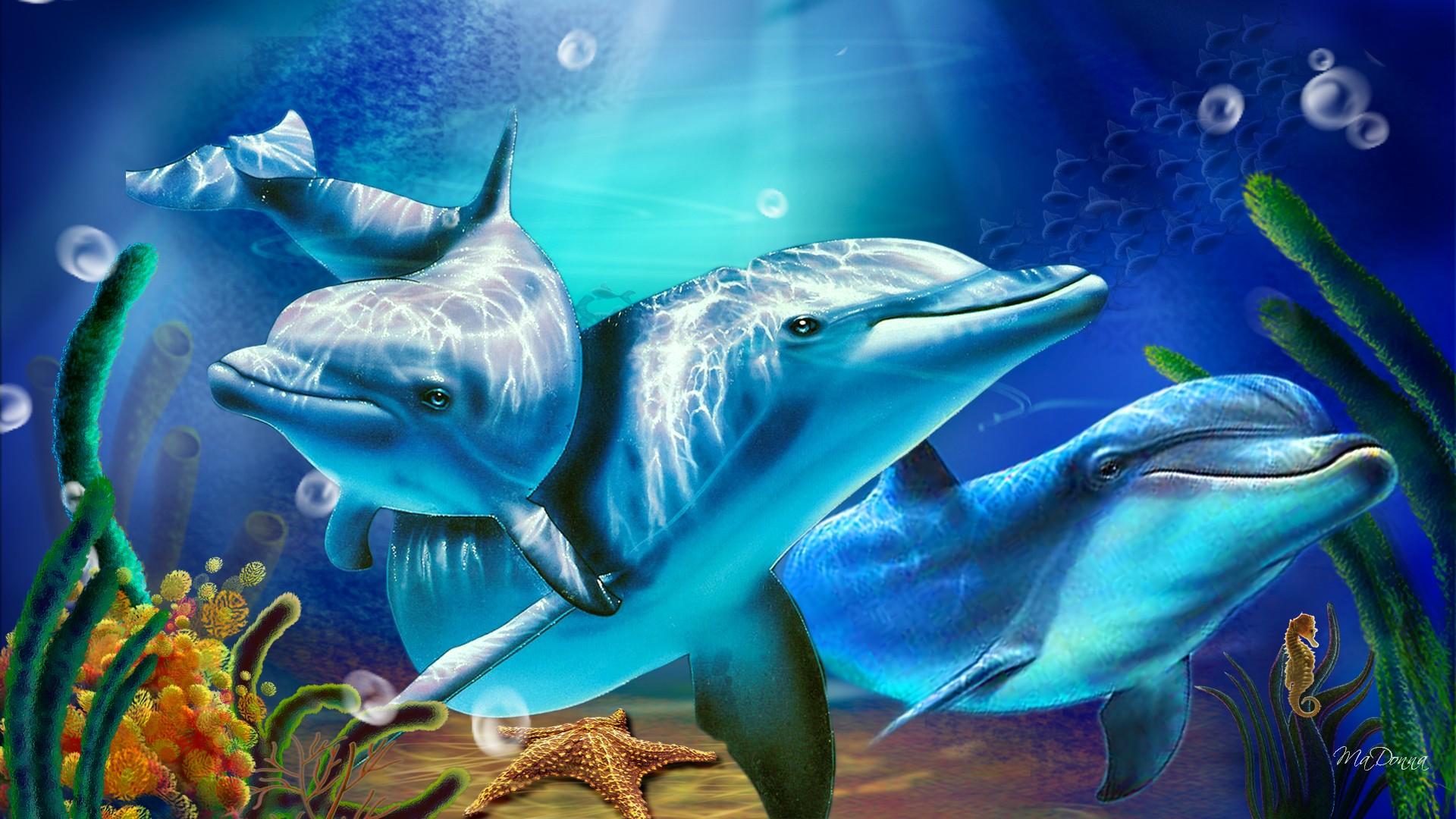Dolphin Backgrounds wallpaper wallpaper hd background desktop 1920x1080