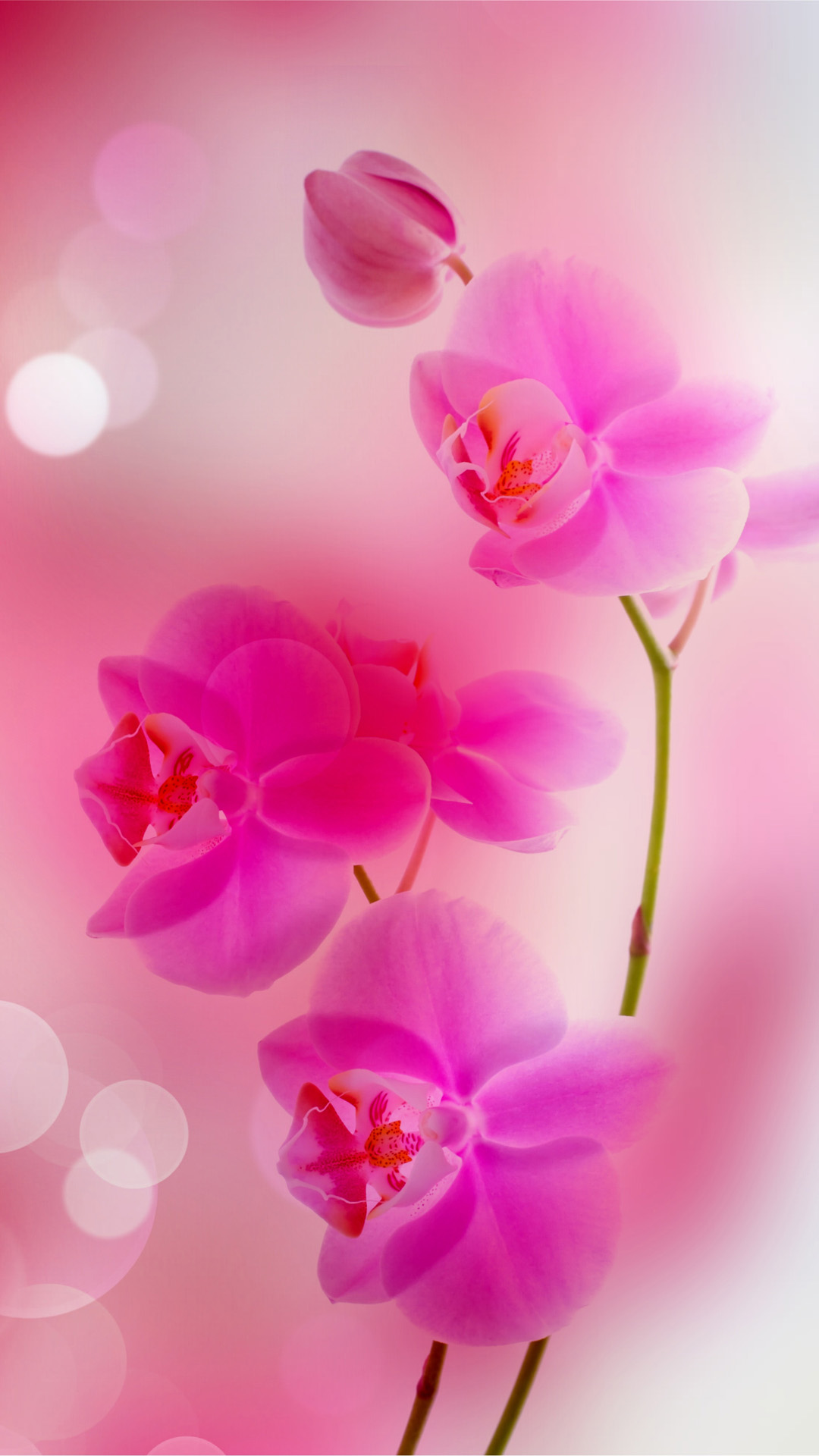 Pink Flowers iphone 6 plus wallpaper iPhone 6 Plus Wallpapers HD 1080x1920