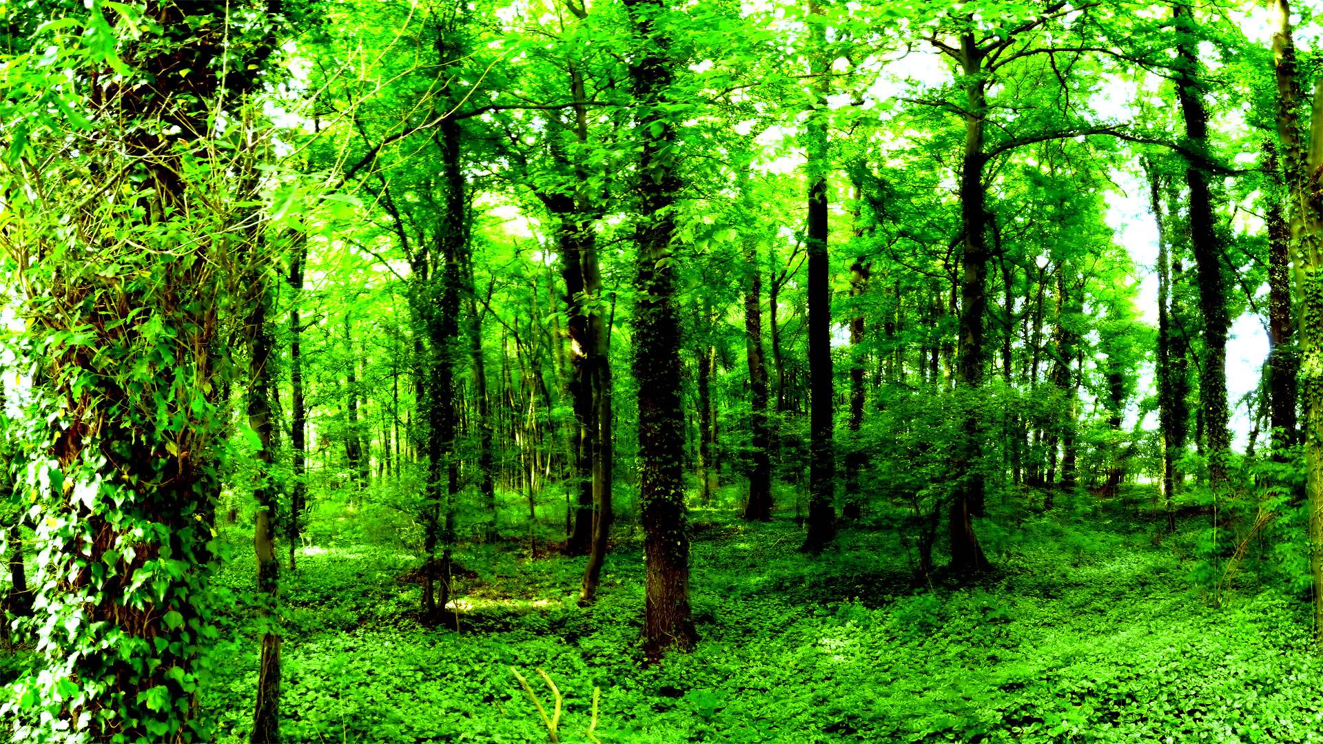Green Forest Wallpapers 1920x1080