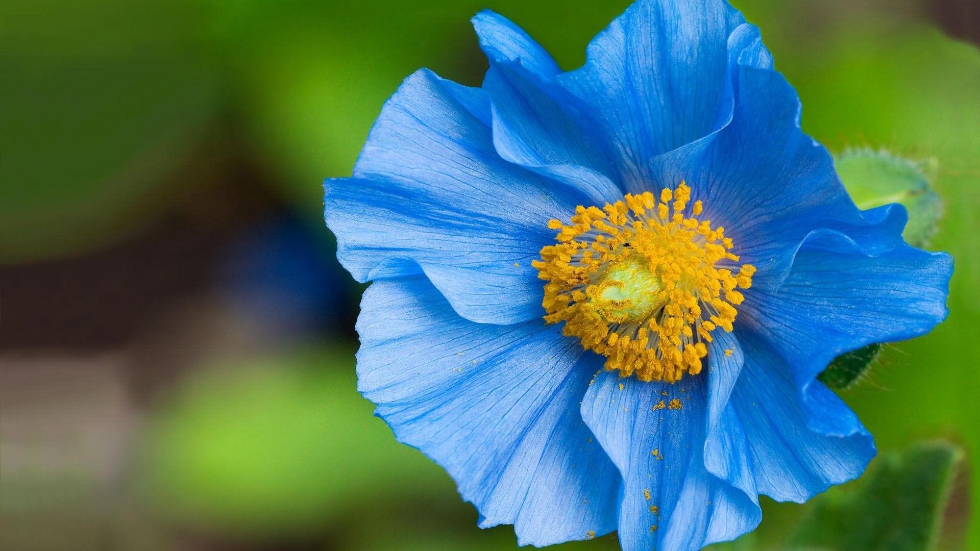 hd wallpapers 1080p flowers desktop full hd wallpapers 1080p flowers 1920x1080