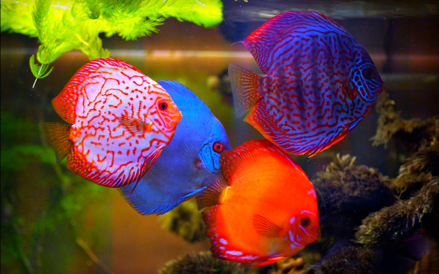 fish live wallpaper free download for pc