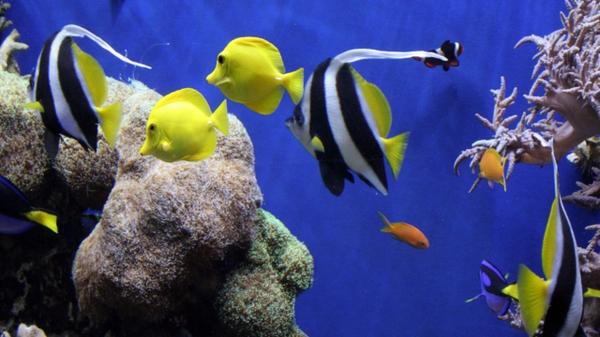 Tropical fish wallpaper desktop wallpapersafari for Plenty of fish desktop