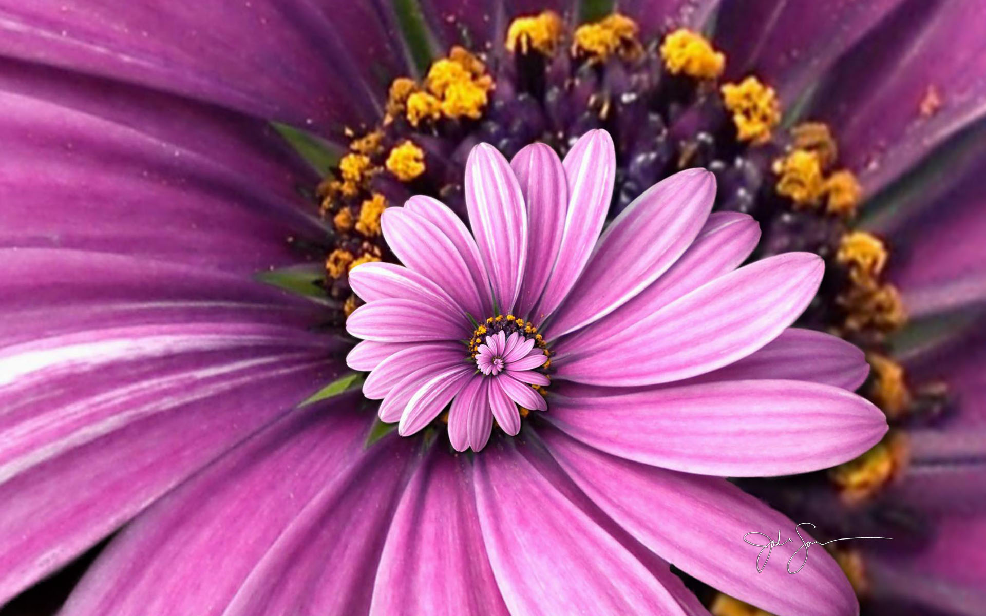 96 beautiful flowers in the world wallpaper 50 beautiful flower beautiful flower wallpaper for android scenery wallpaper includes a purple droste with golden stamen 1920x1200 izmirmasajfo