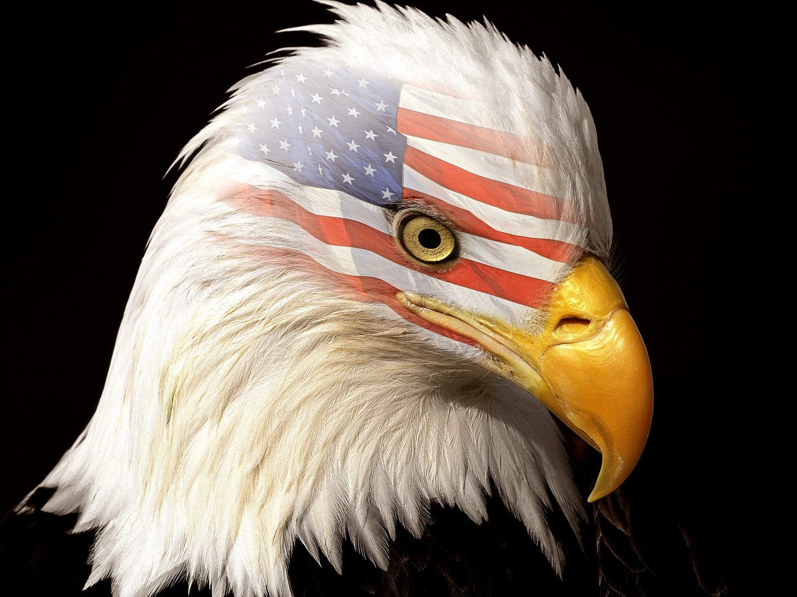 Eagles Flags Wallpaper 1600x1200 Eagles Flags USA Bald Eagles 1600x1200
