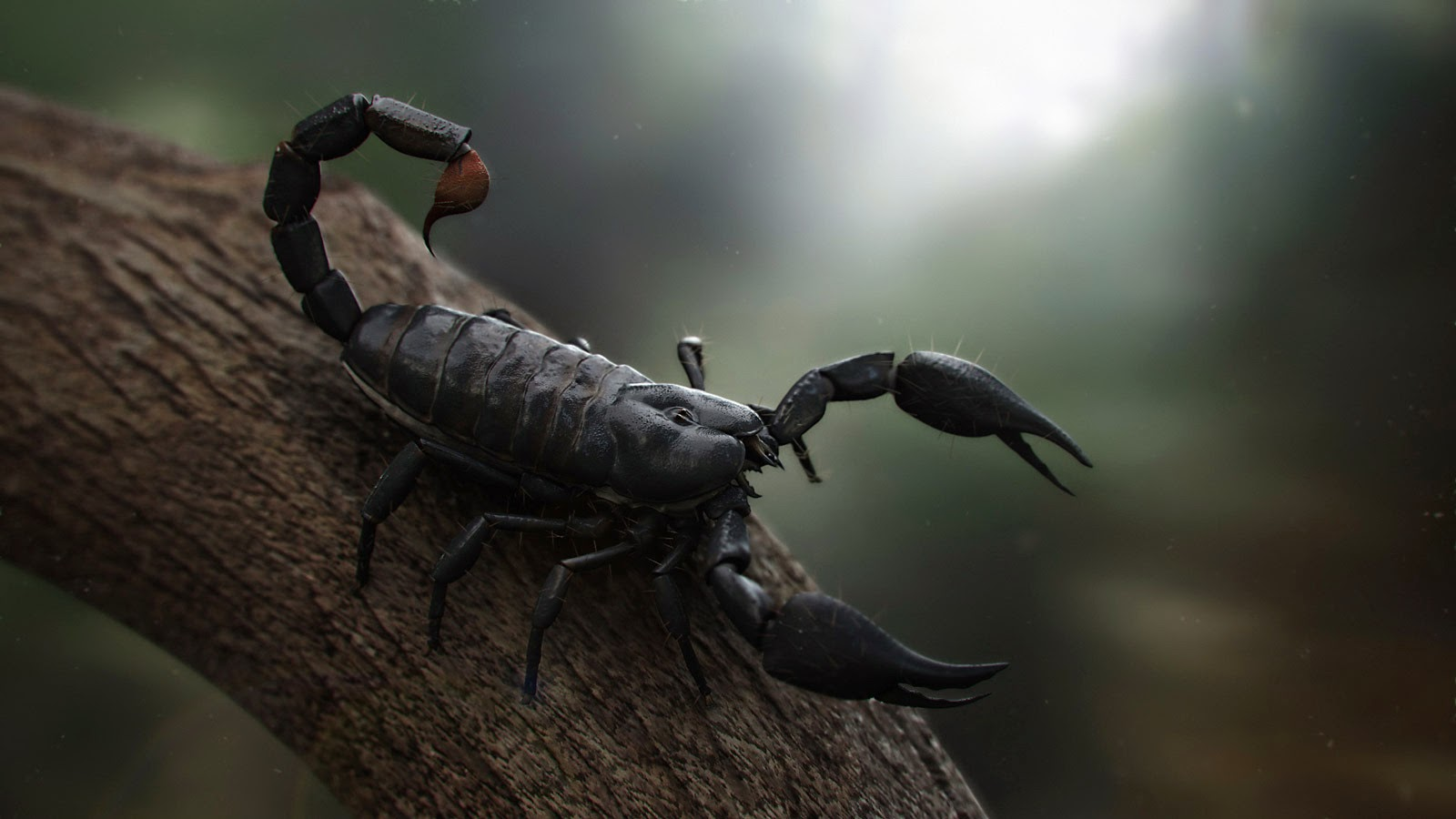 Black Scorpion HD Wallpapers   HD Wallpapers Blog 1600x900