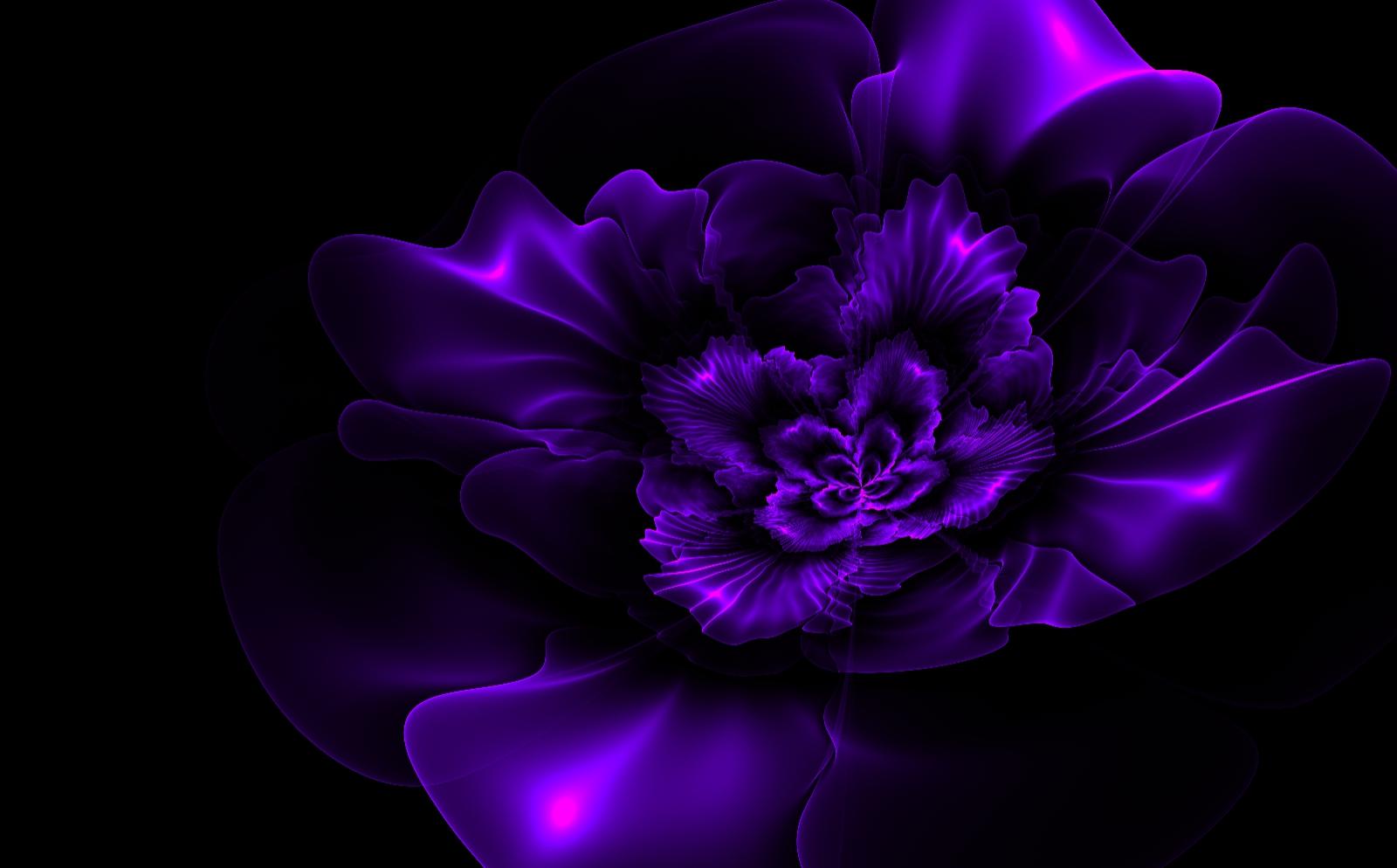 Dark purple fractal flower 1600x994