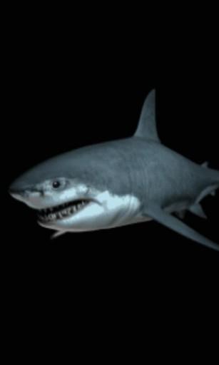 50+ Live Shark Wallpaper Free on WallpaperSafari