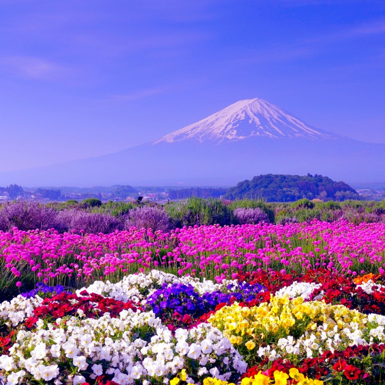 Cool Spring Wallpapers: Dual Monitor Wallpaper Of Spring