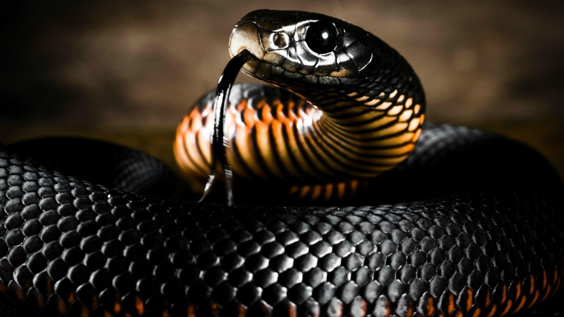 Hd Wallpaper Of Black Snake: Black Snake Wallpaper