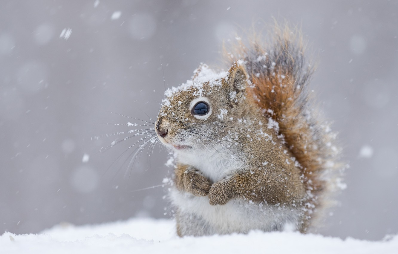 Wallpaper winter snow protein images for desktop section 1332x850