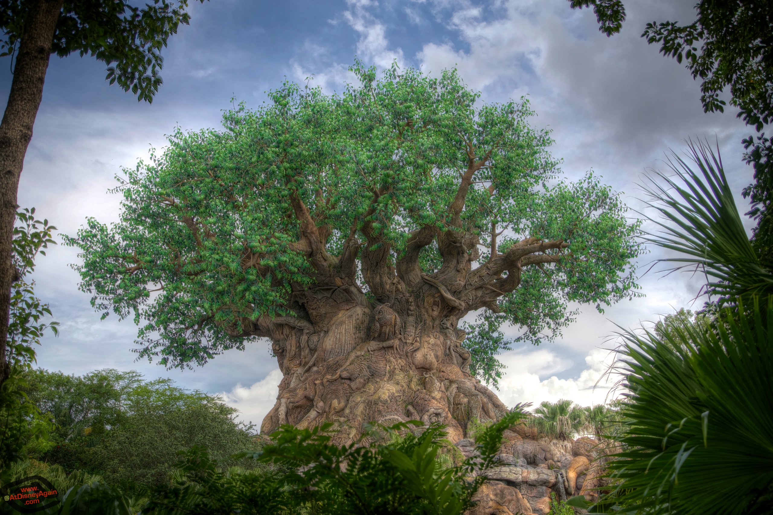 Tree of Life Wallpapers At Disney Again 2560x1706