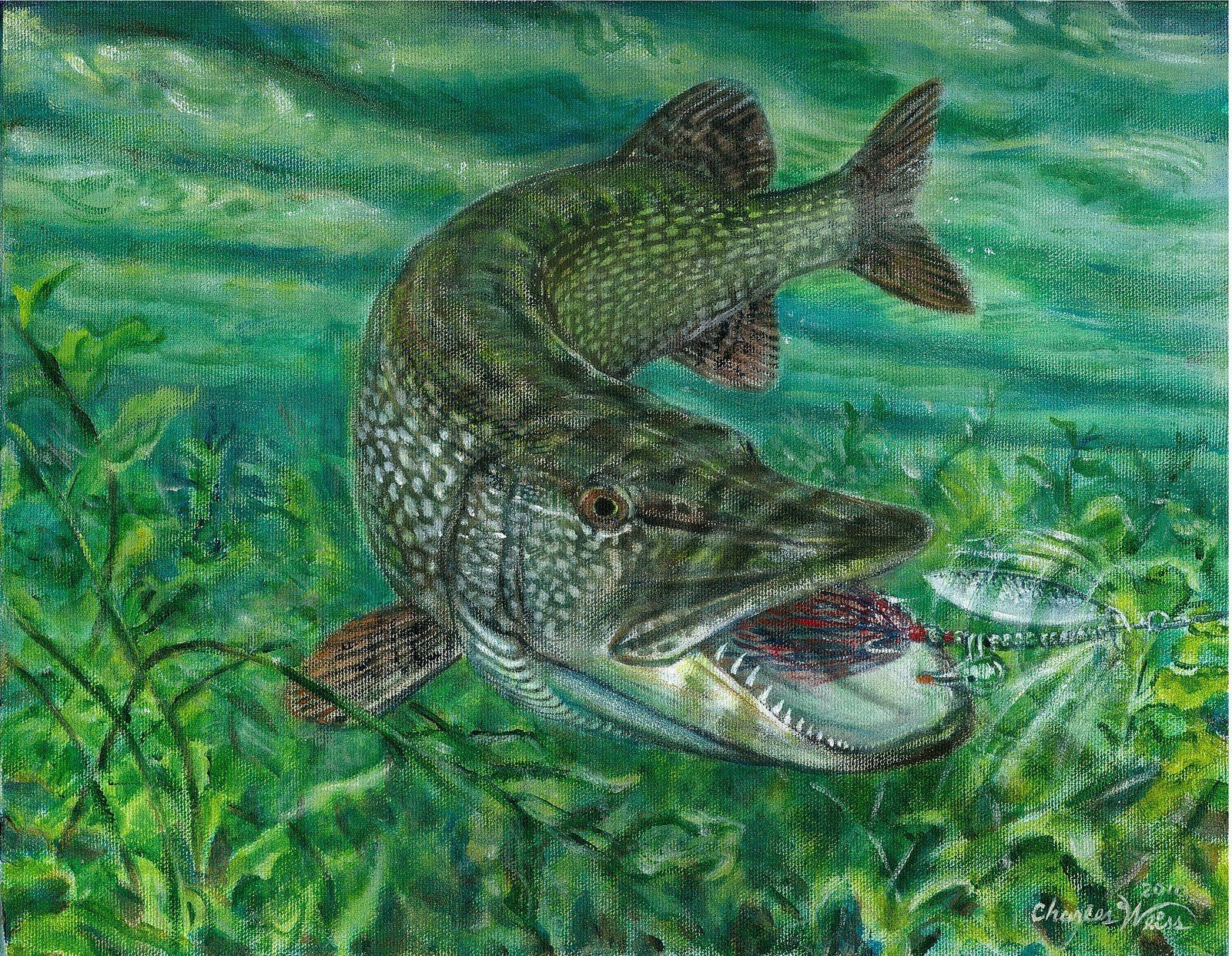 Pin on fish 1600x1242