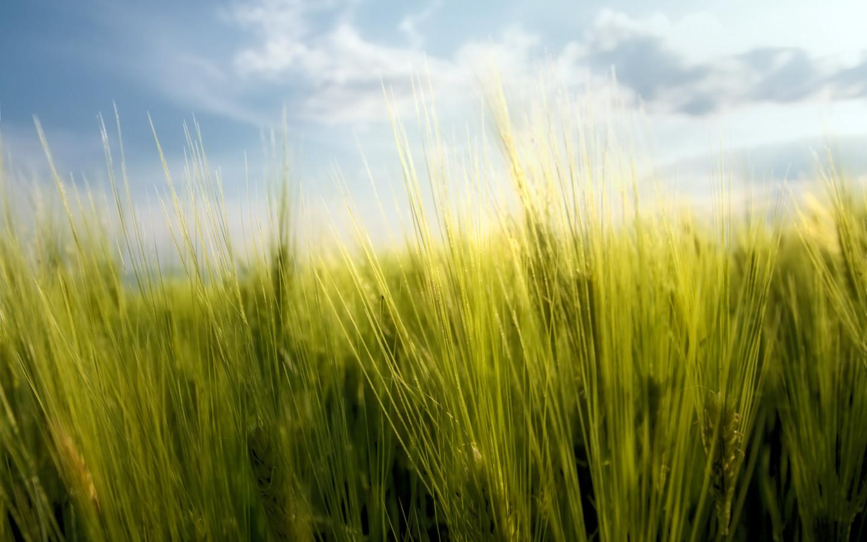 Desktop wallpapers Nature Fields Spring grass 1440x900 1440x900