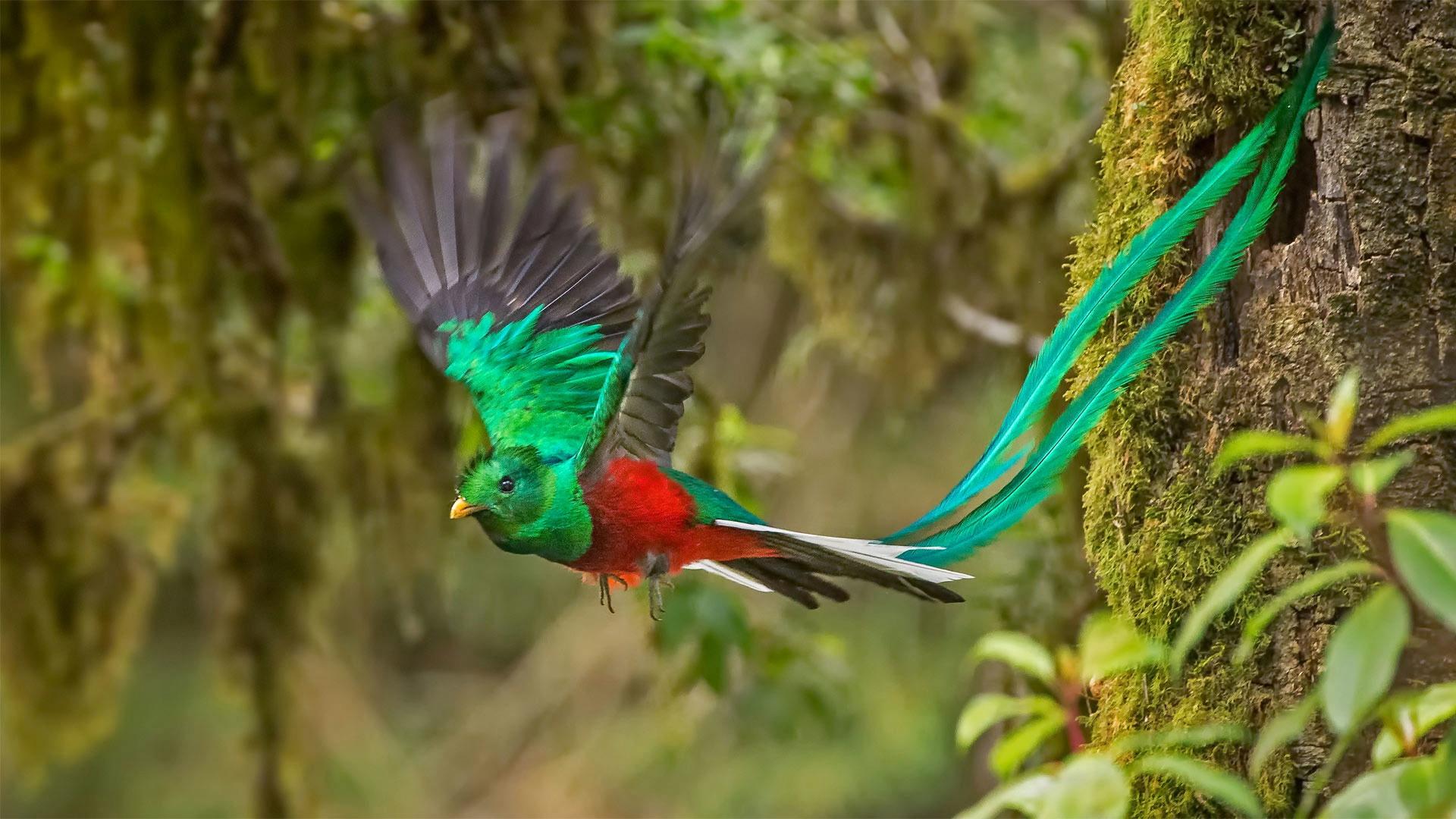 Quetzal HD Wallpaper Background Image 1920x1080 ID914923 1920x1080
