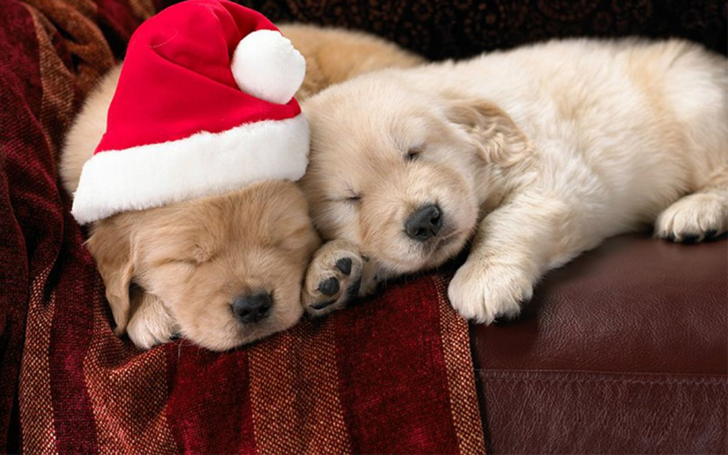 Free Download To Cute Puppy Wallpapers For Desktop Mobile