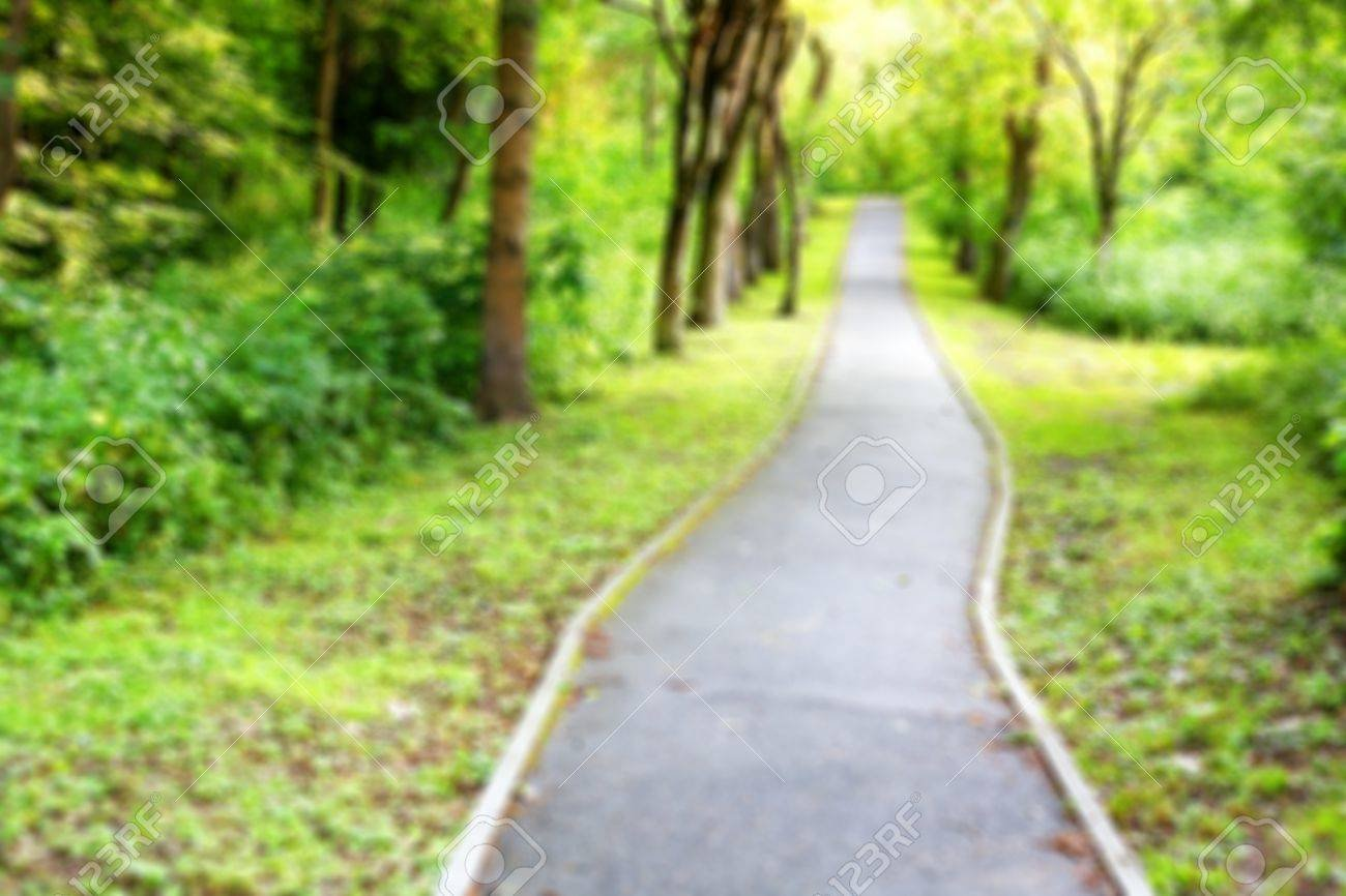 Hiking Trail In The Forest Blurred Background Stock Photo Picture 1300x866