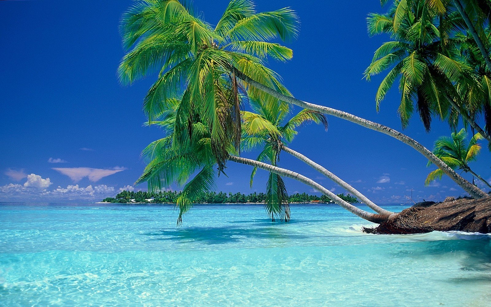 Tropical Beach Screensavers And Wallpaper: Wallpaper Landscapes Beach Tropical HD
