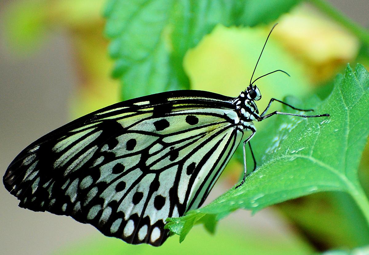 Butterfly Wallpaper HD 48 Freetopwallpapercom 1200x830